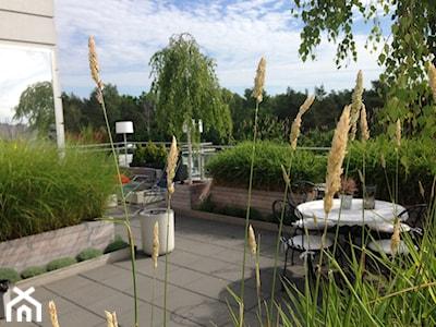 Ogród na dachu – jak go założyć i zaaranżować? Sprawdź porady i inspiracje
