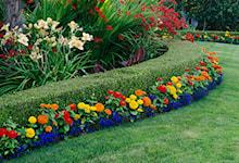 Witam serdecznie. Piękne zdjęcie i piękne rośliny. Jak nazywają się rośliny zasadzone przed żywopłotem oraz ta duża kremowa w środku. Z góry dziękuję za odpowiedź.