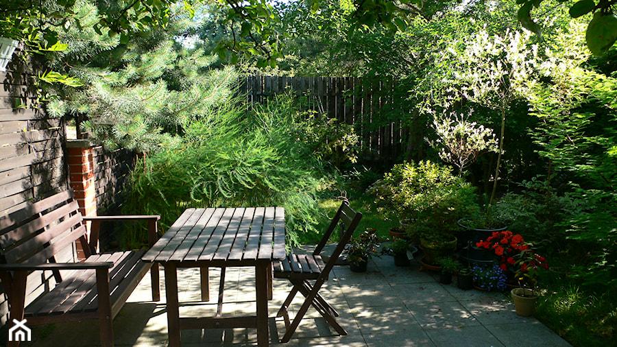 ogród deszczowy co to jest
