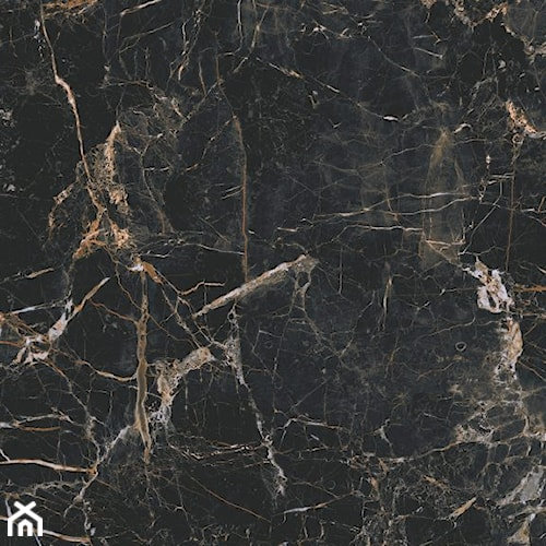 Marquina gold 120 x 120