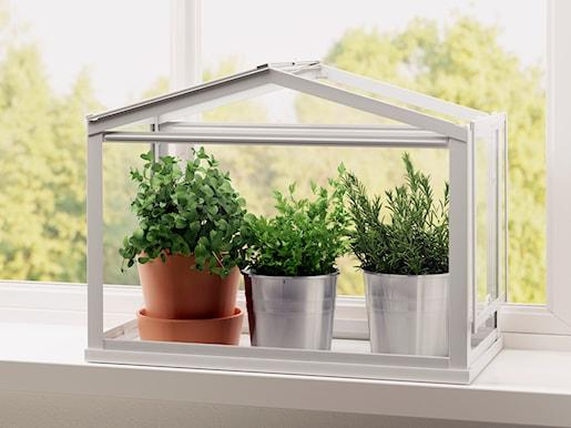 Rośliny I Wiosenna Zieleń W Domu Homebook