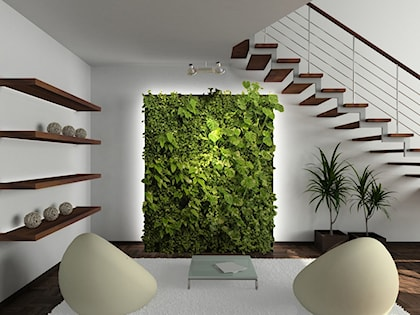 Zielona ściana We Wnętrzach Jak I Gdzie Zamontować Oraz Jak Pielęgnować Ogród Wertykalny W Domu Homebook