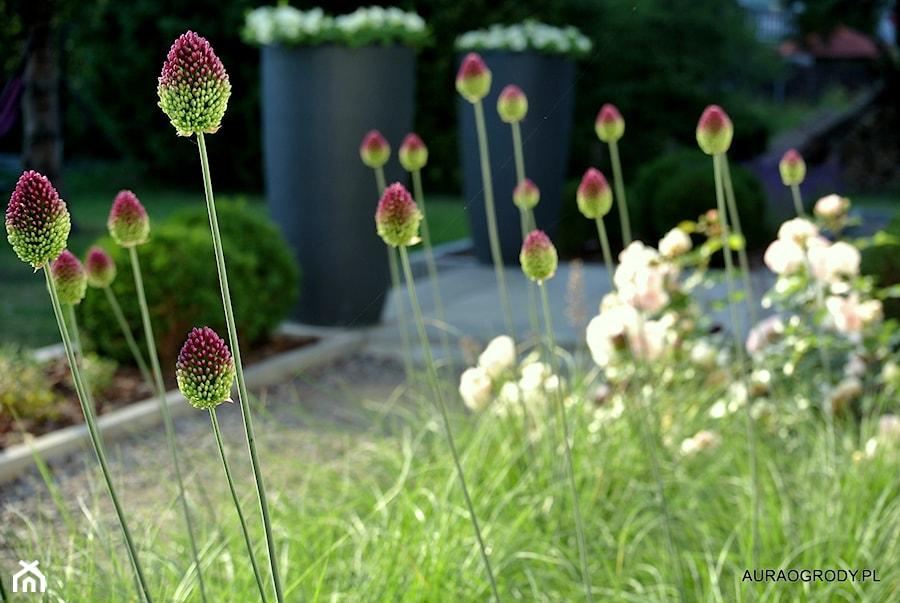 NOWOCZESNY OGRÓD Z KWITNĄCYMI ROŚLINAMI - Ogród, styl nowoczesny - zdjęcie od OGRODOWA AURA