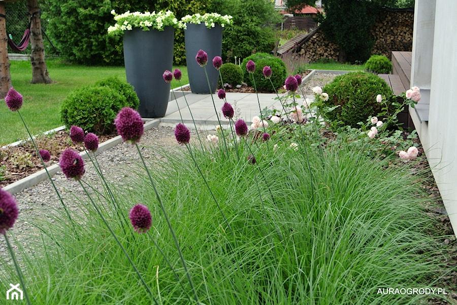 NOWOCZESNY OGRÓD Z KWITNĄCYMI ROŚLINAMI - Ogród za domem - zdjęcie od OGRODOWA AURA