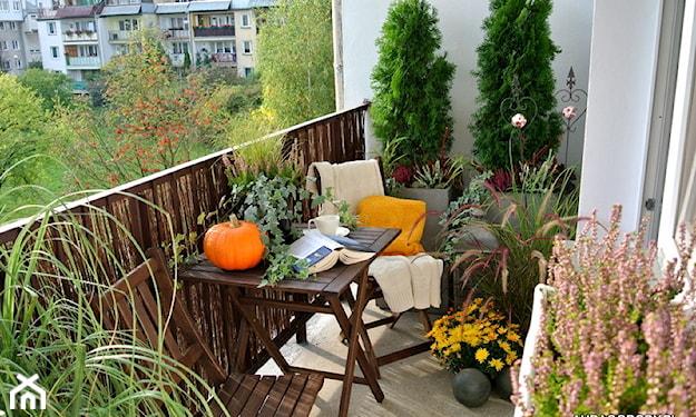 ogród na małym balkonie
