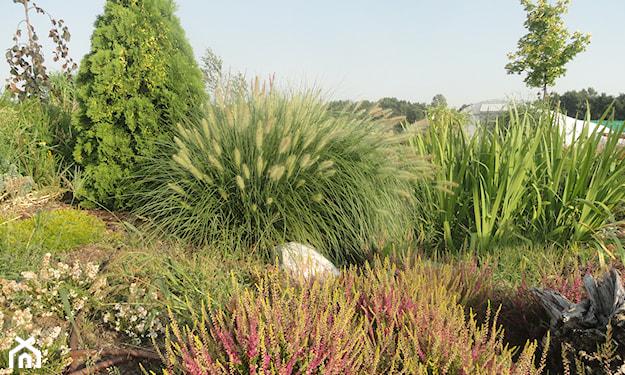 kompozycje z traw ozdobnych