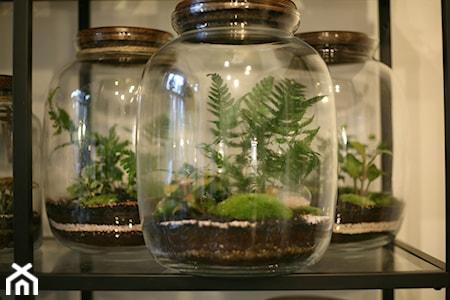 Ogród w słoiku – pielęgnacja. Jak podlewać i dbać o las w szkle?