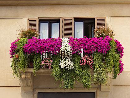 Kwiaty Na Balkonie Zdjecia Metamorfozy Domów Aranżacje
