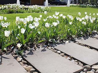 Jak samodzielnie zaprojektować ogród? Poradnik