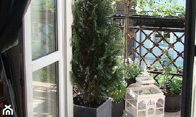 rośliny zaciemniające balkon