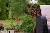 kwiaty na sloneczny taras
