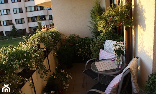 balkon z bujną roślinnością