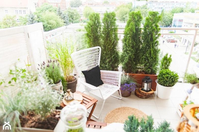 Rosliny Na Sloneczny Balkon Homebook