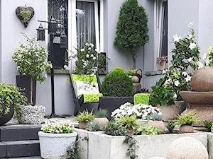 Tanie donice ogrodowe – sprawdź topowe modele do 25, 50 i 100 złotych