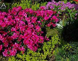 Dekoracje+i+ozdoby+do+ogrodu+Kobea+Ogrody+i+Bruki+-+zdj%C4%99cie+od+Ewa+Tyrna