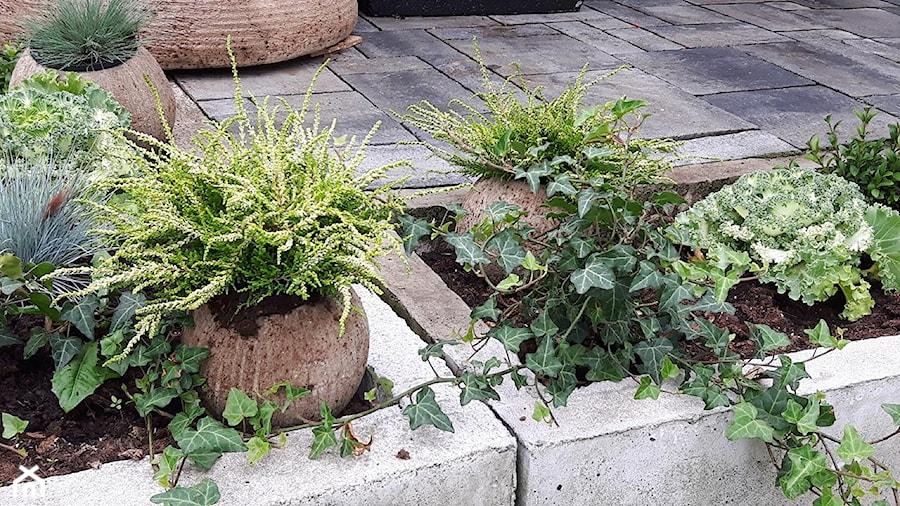 Dekoracje i ozdoby do ogrodu z betonu-Kobea Ogrody i Bruki - Ogród w stylu skandynawskim - zdjęcie od Ewa Tyrna