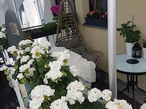 Białe pelargonie - zdjęcie od oliwerioskar