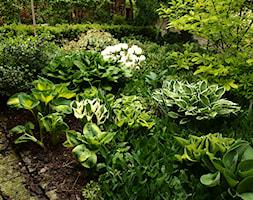 Średni ogród tropikalny - zdjęcie od Joanna Morys-Orządała