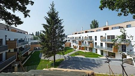 Best Timber Polska