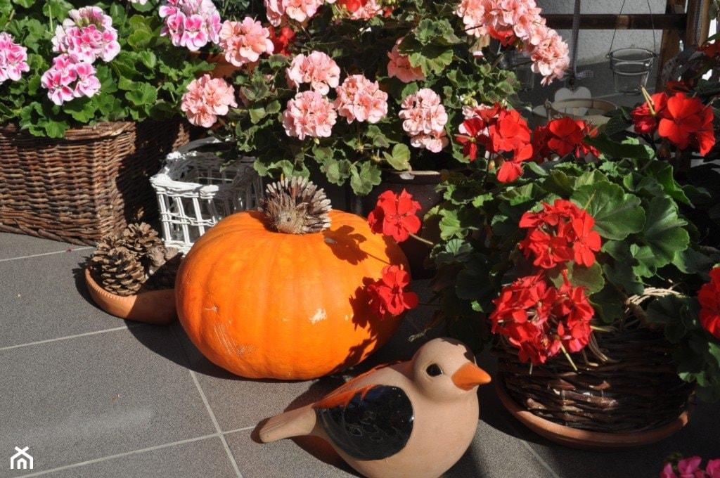 jesień na balkonie