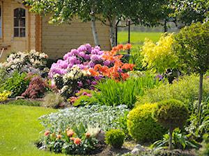 Jakie kwiaty do ogrodu wybrać? Przegląd najpiękniejszych gatunków