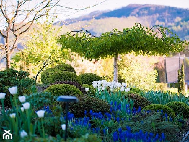 jak zaplanowac ogród deszczowy
