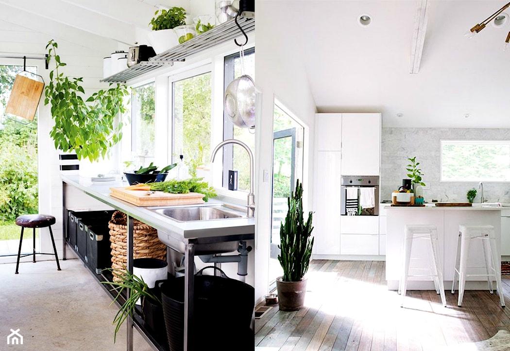цветы на кухне, сад на дому