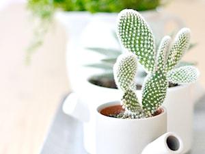 Kaktusy doniczkowe – wszystko o pielęgnacji kaktusów