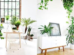Jak udekorować roslinami wnętrze domu? Domowe plantacje! - zdjęcie od cleo-inspire