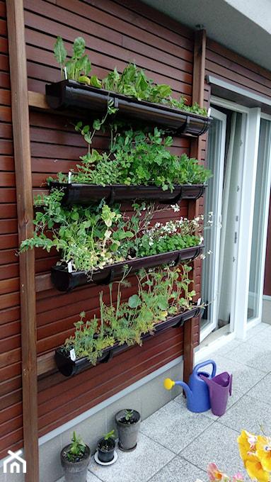 Zioła Na Balkonie Uprawa Sadzenie Lista Ziół