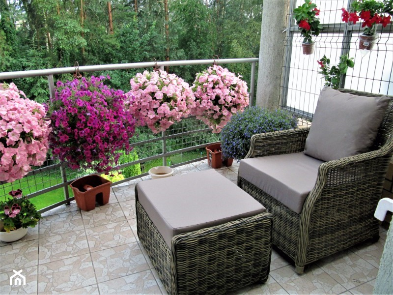 Rośliny Na Słoneczny Balkon Homebook