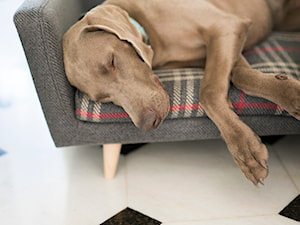 Pies na kanapie. Ekskluzywne legowiska dla psów. - Producent