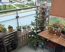 Róża, pelargonie, bakopy, truskawki i pomidorki. - zdjęcie od bykao