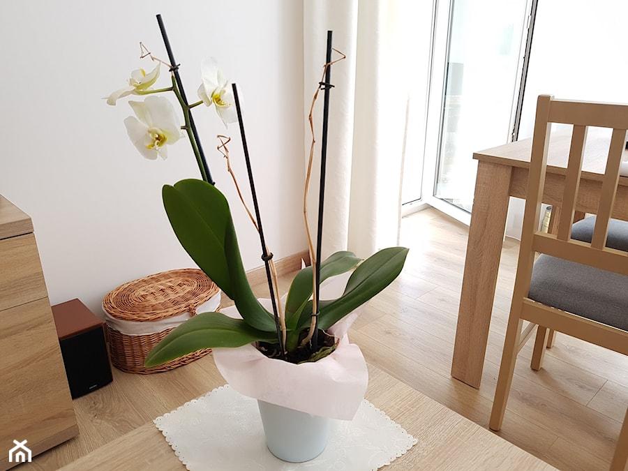 Dlaczego Storczyk Zrzuca Kwiaty Zielony Ogrodek