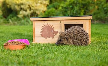 Domek dla jeża – jak dbać o jeże w ogrodzie?