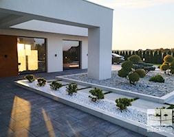 P%C5%82yty+betonowe+wraz+z+zimozielon%C4%85+ro%C5%9Blinno%C5%9Bci%C4%85+-+zdj%C4%99cie+od+Hibner+Studio+Pracownia+Architektury+Krajobrazu