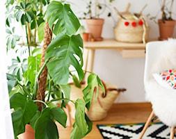 Urban jungle w domowej pracowni - zdjęcie od Polenka - Homebook