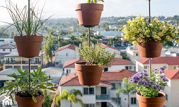 Ogród na balkonie w bloku