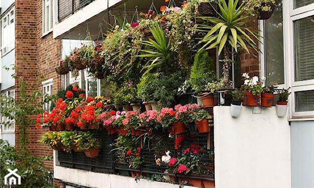 ukwiecony balkon w bloku