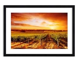 Obraz w ramie - Delikatnie owocowe z nutą słońca