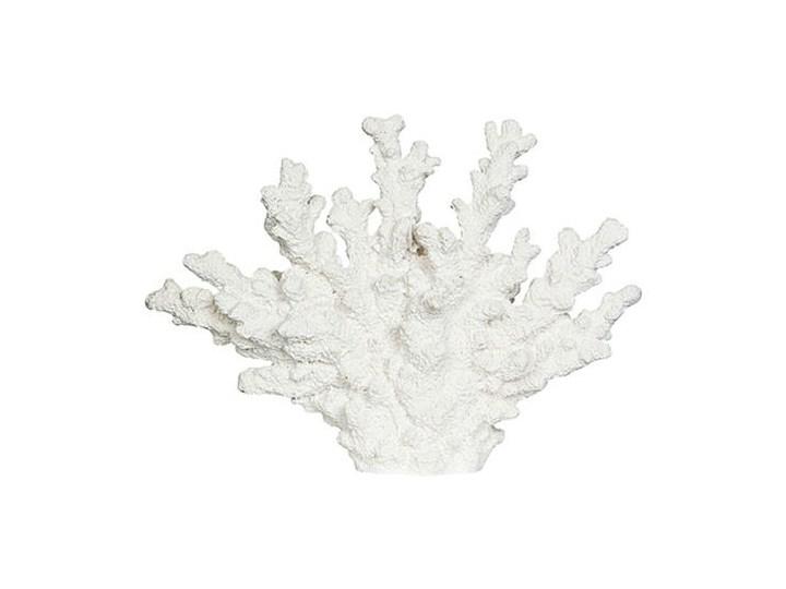 KORALOWIEC BIAŁY ANEMONE 26x6x18,5cm Kategoria Figury i rzeźby