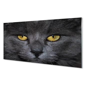 Obrazy akrylowe Czarny kot