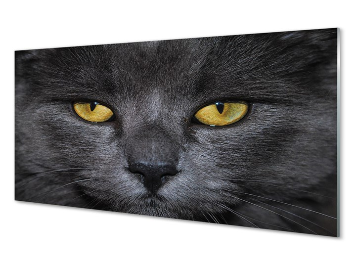 Obrazy akrylowe Czarny kot Pomieszczenie Przedpokój Pomieszczenie Salon
