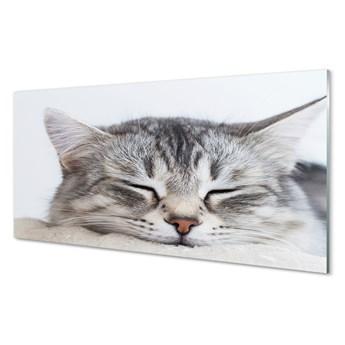 Obrazy akrylowe Śpiący kot