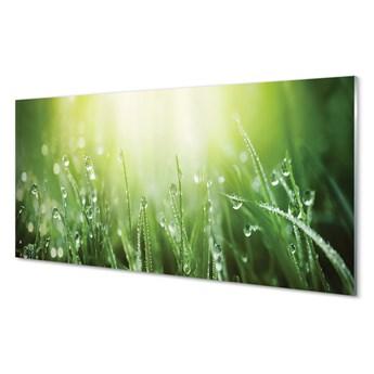 Obrazy akrylowe Krople trawa słońce
