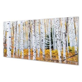 Obrazy akrylowe Jesień brzozy