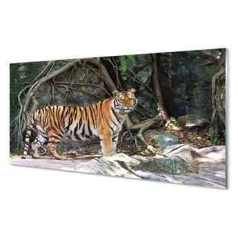 Obrazy akrylowe Dżungla tygrys