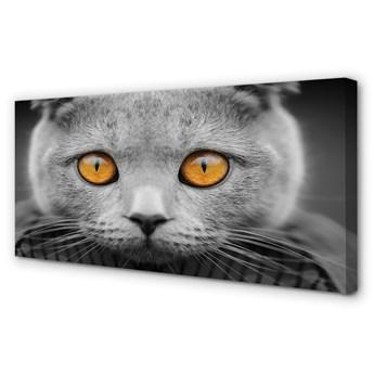 Obrazy na płótnie Szary kot brytyjski
