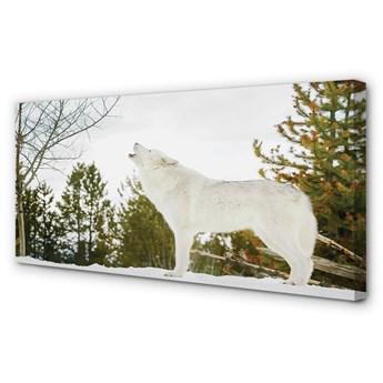Obraz na płótnie Wilk zima las