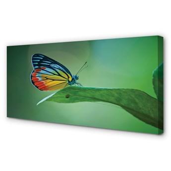 Obraz na płótnie Kolorowy motyl liść